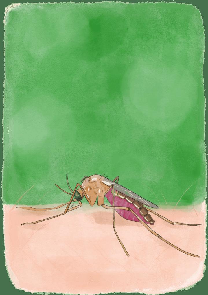 traitements contre le paludisme en voyage
