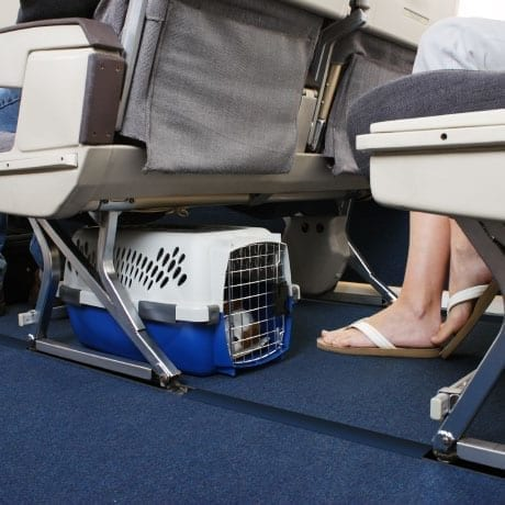 Passager er son chien dans une cage sous le siège dans un avion