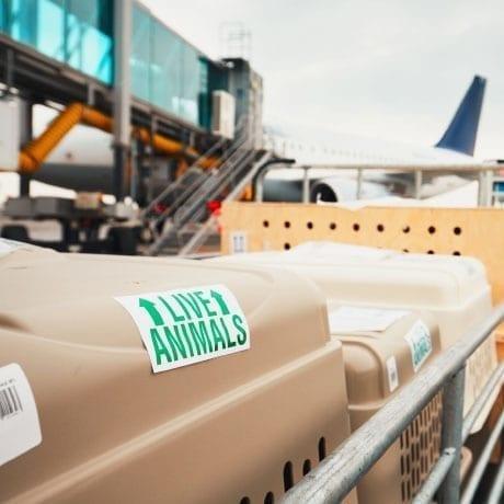 Caisses pour chien en cours de transport dans un chariot dans un aéroport