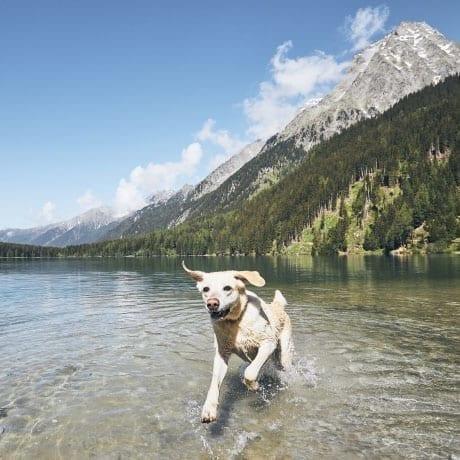Chien heureux qui court dans un lac devant des montagnes