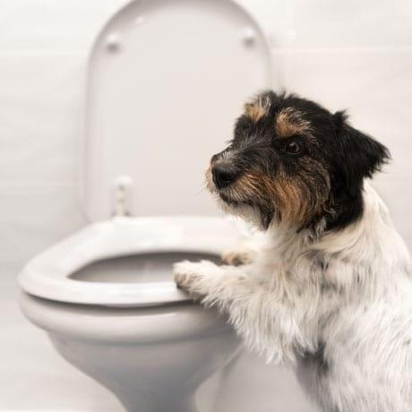 chien sur des toilettes