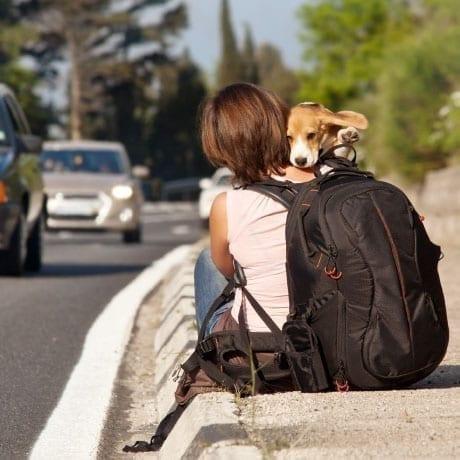 Voyager en auto stop avec son chien