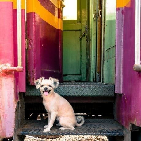 Petit chien sur la marche d'un train en Inde