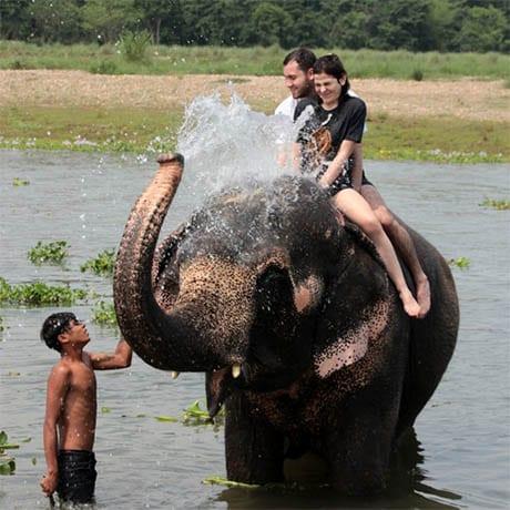 Maltraitance Elephant
