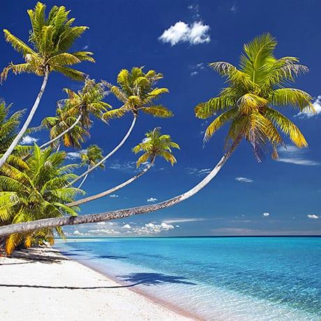 La plage de Hirifa à Fakarava, Polynésie française