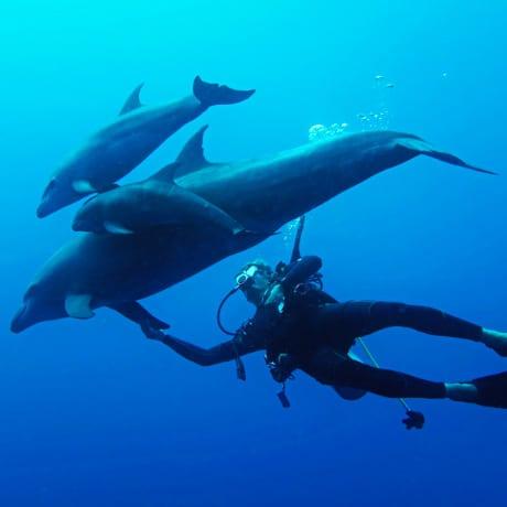 Plonger avec les dauphins à Rangiroa