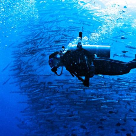 Sipadan boule de jack fish